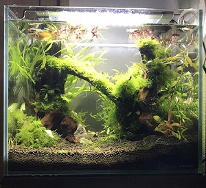 熱帯魚水槽のライト