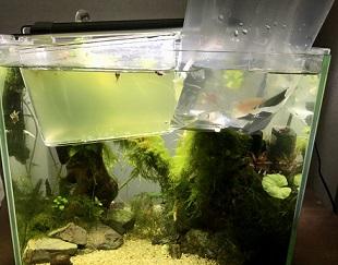 熱帯魚の水合わせ
