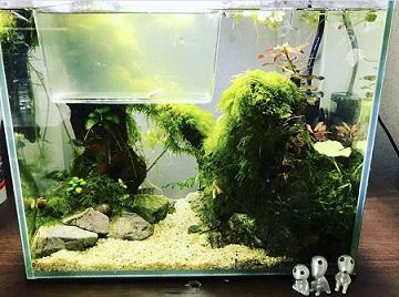 熱帯魚水草