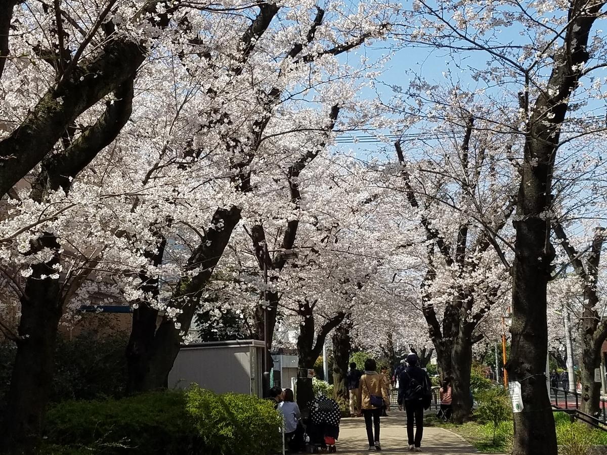 新生活と桜