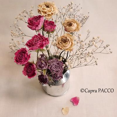 f:id:capra-pacco:20181115235146j:plain