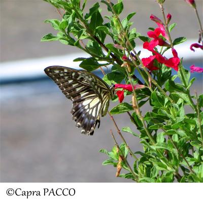 f:id:capra-pacco:20210728141207j:plain