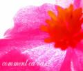 pink pinky pinkst!