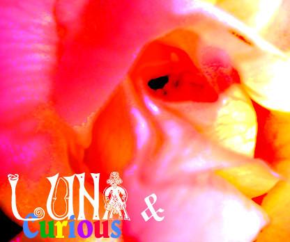 f:id:caramelaucafe:20110709111245j:image