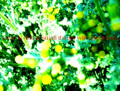 f:id:caramelaucafe:20130430230218j:image