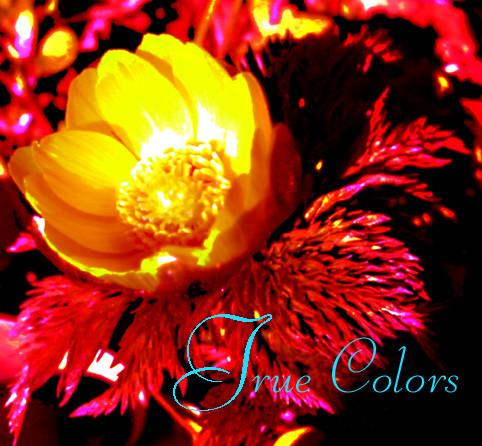 f:id:caramelaucafe:20140307174755j:image