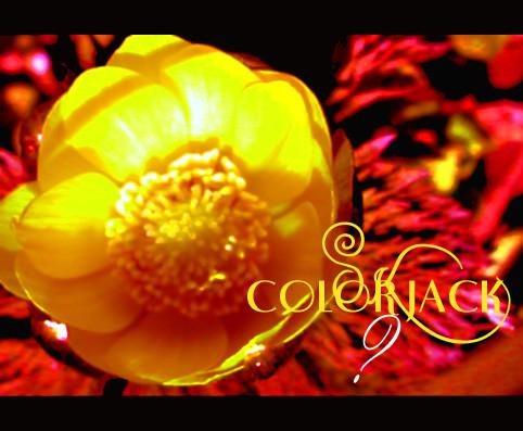 f:id:caramelaucafe:20140307174756j:image