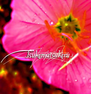 f:id:caramelaucafe:20140707173230j:image
