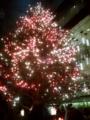 銀座ミキモトのツリー