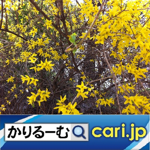 f:id:cari11:20191208101233j:plain