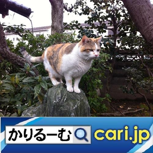 f:id:cari11:20200109111130j:plain