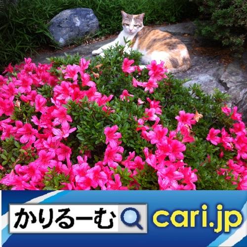 f:id:cari11:20200212215805j:plain