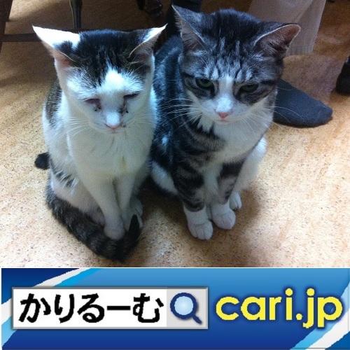 f:id:cari11:20200218221754j:plain