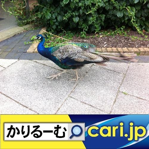 f:id:cari11:20200227193540j:plain