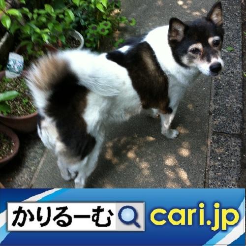 f:id:cari11:20200301090445j:plain