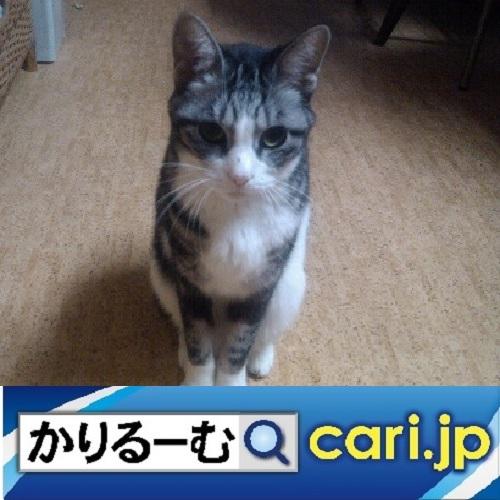f:id:cari11:20200324142832j:plain