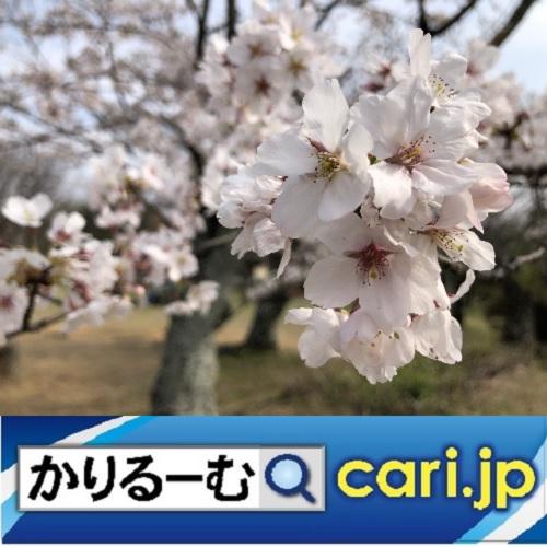 f:id:cari11:20200414174012j:plain