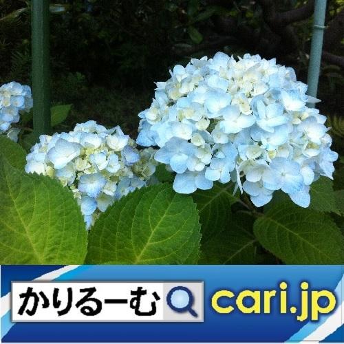 f:id:cari11:20200604070007j:plain