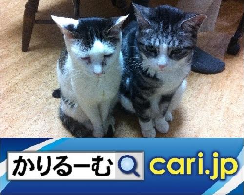 f:id:cari11:20201001111210j:plain
