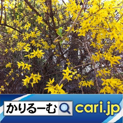 f:id:cari11:20201101091630j:plain
