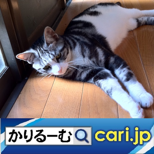 f:id:cari11:20210201082320j:plain