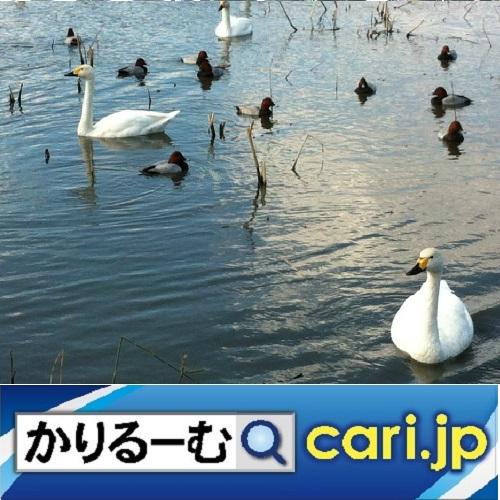 f:id:cari11:20210217185105j:plain