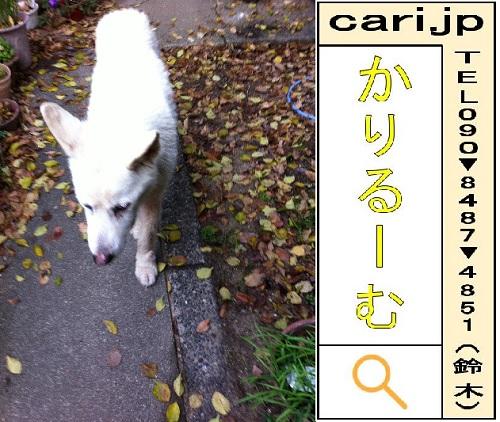 f:id:cari11:20210227093926j:plain