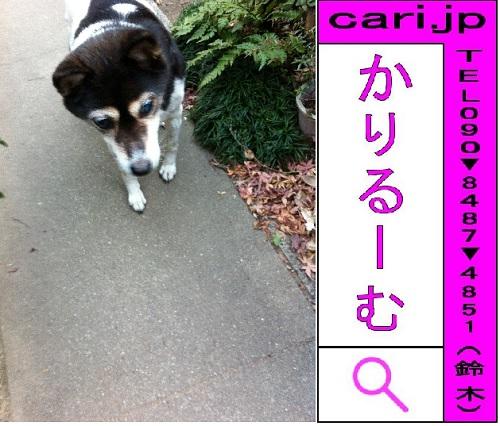 f:id:cari11:20210402205829j:plain
