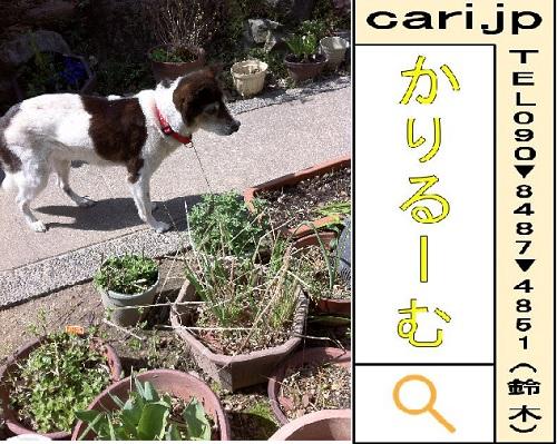 f:id:cari11:20210403091520j:plain