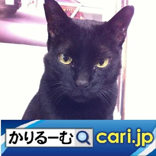 f:id:cari11:20210701080202j:plain