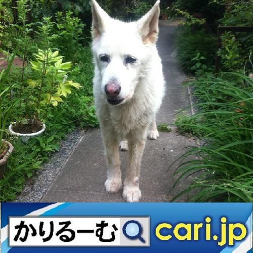 f:id:cari11:20210710075417j:plain