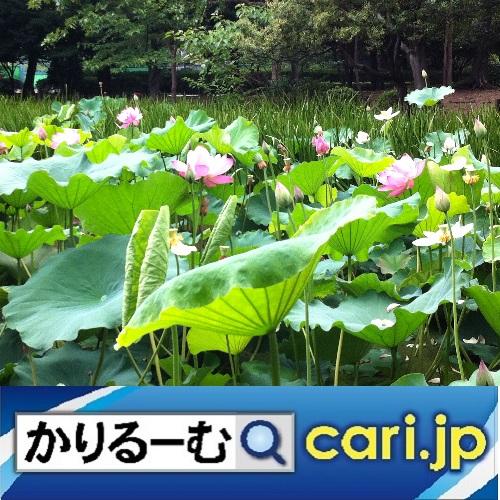 f:id:cari11:20210717144250j:plain