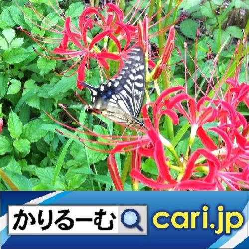 f:id:cari11:20210801080246j:plain