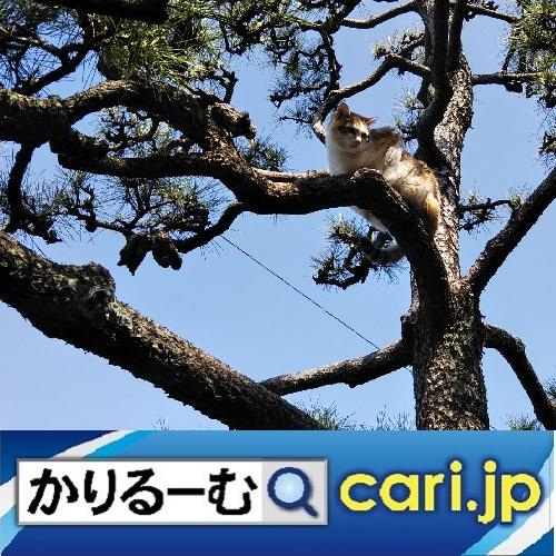 f:id:cari11:20210826121341j:plain