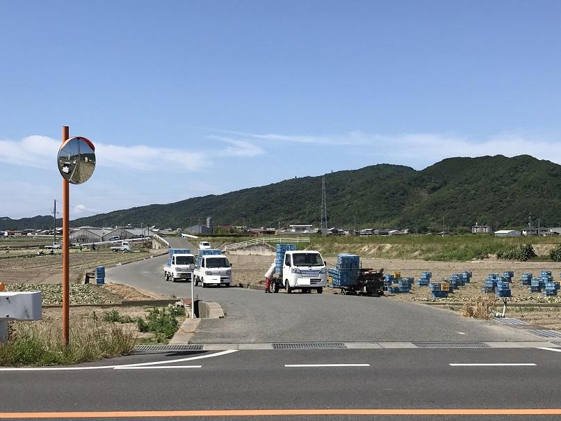 2017年淡路島玉ねぎ収穫トラック積み込み