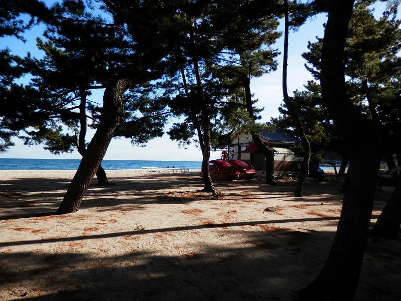 淡路島洲本大浜海水浴場と松