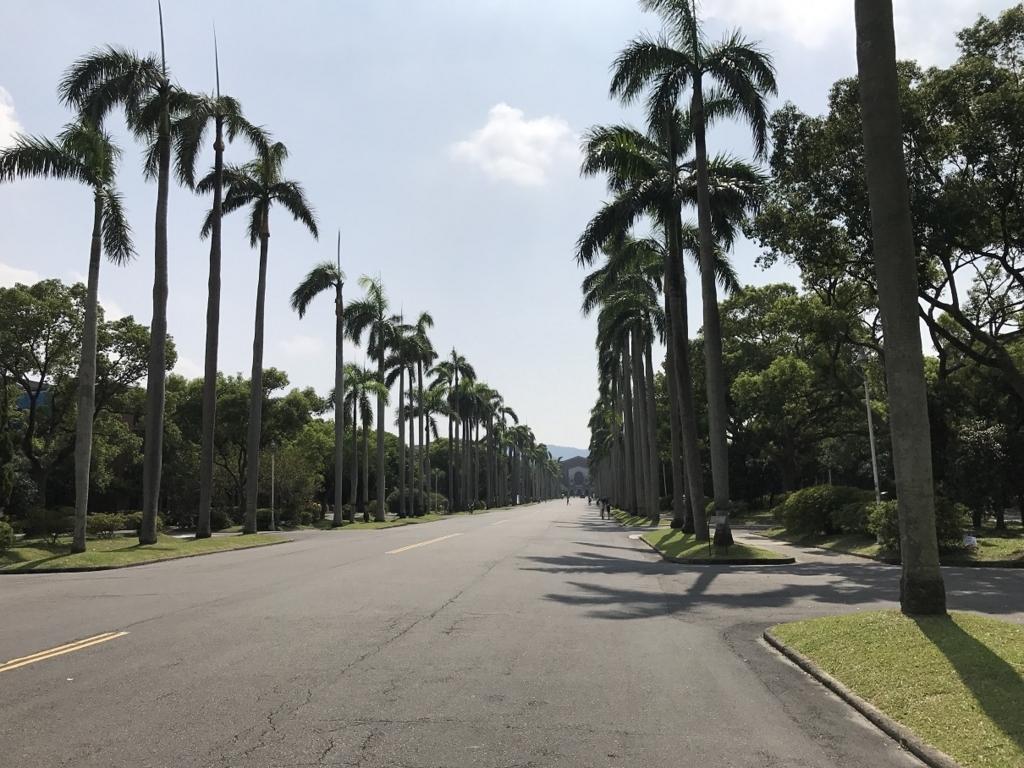 台湾大学椰子大道1
