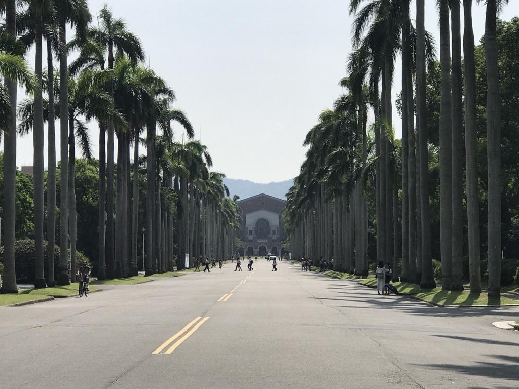 台湾大学椰子大道2017年夏