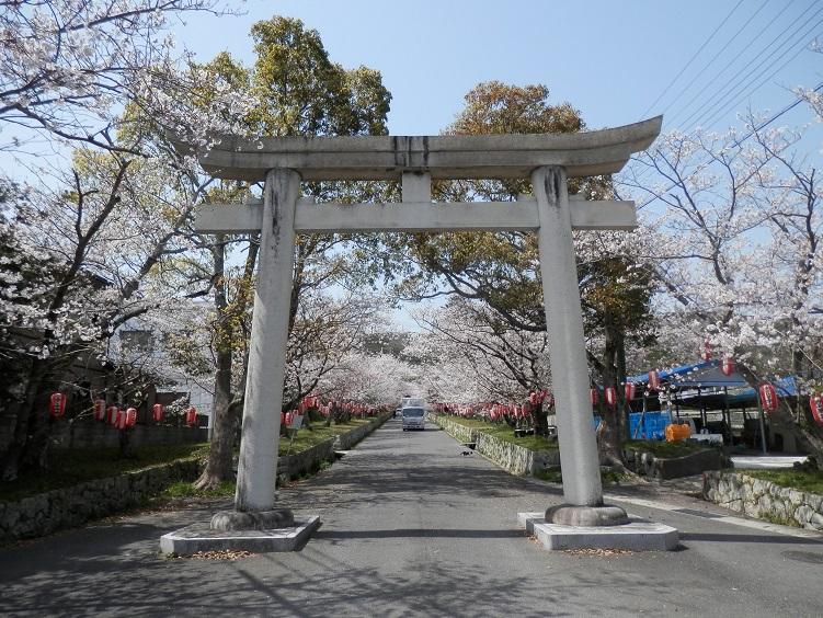 2018年淡路島賀集八幡桜