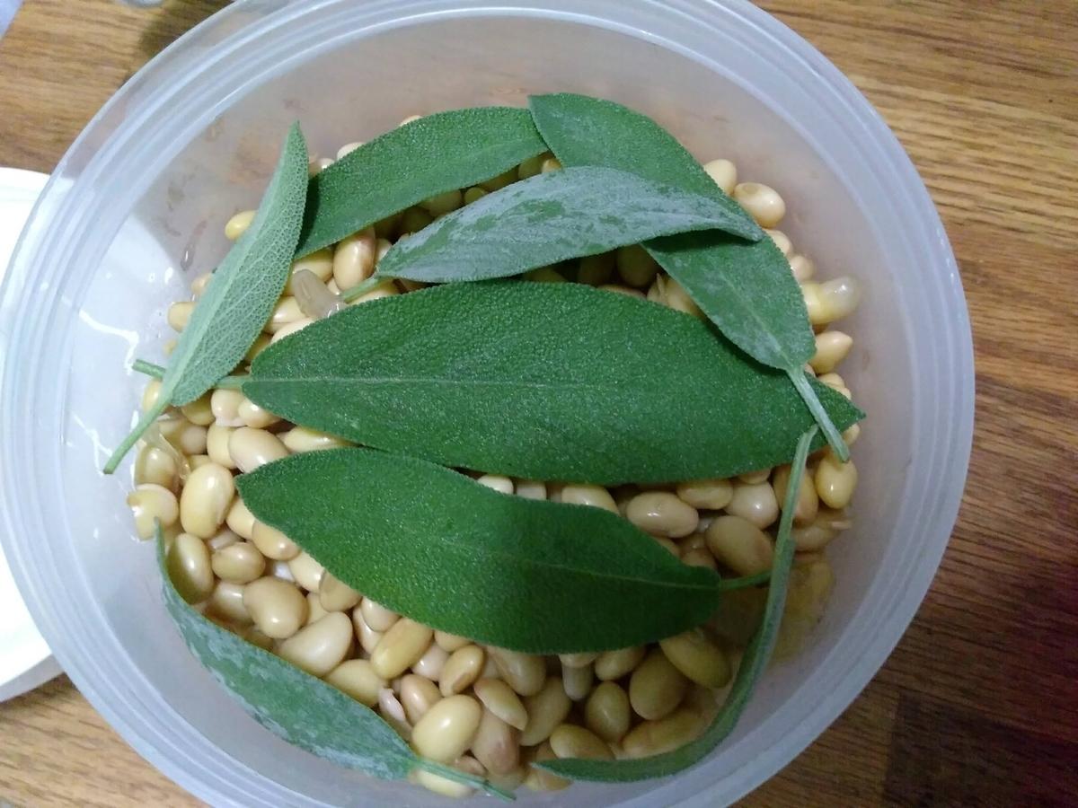 ヨーグルティアに入れた茹でた大豆の上にセージの葉っぱを並べた写真