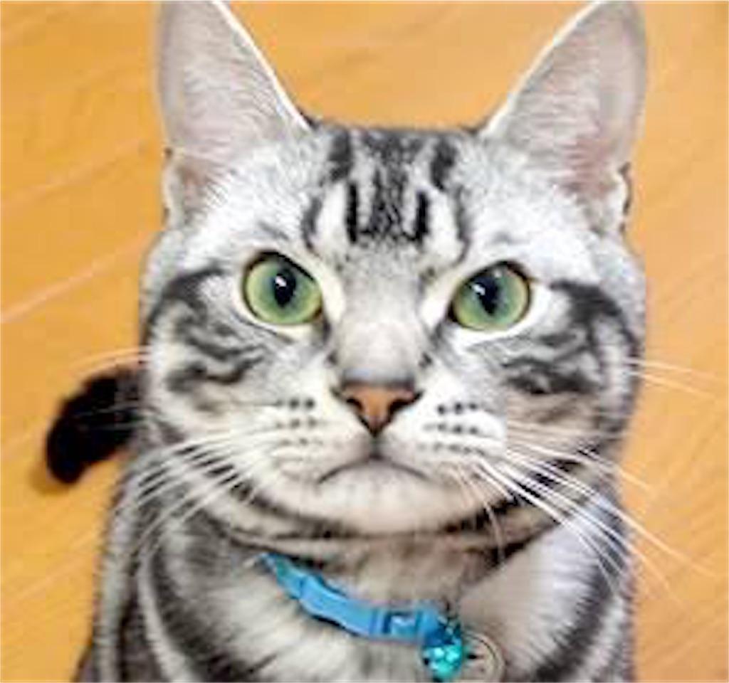 f:id:cat-baron:20170505235307j:image