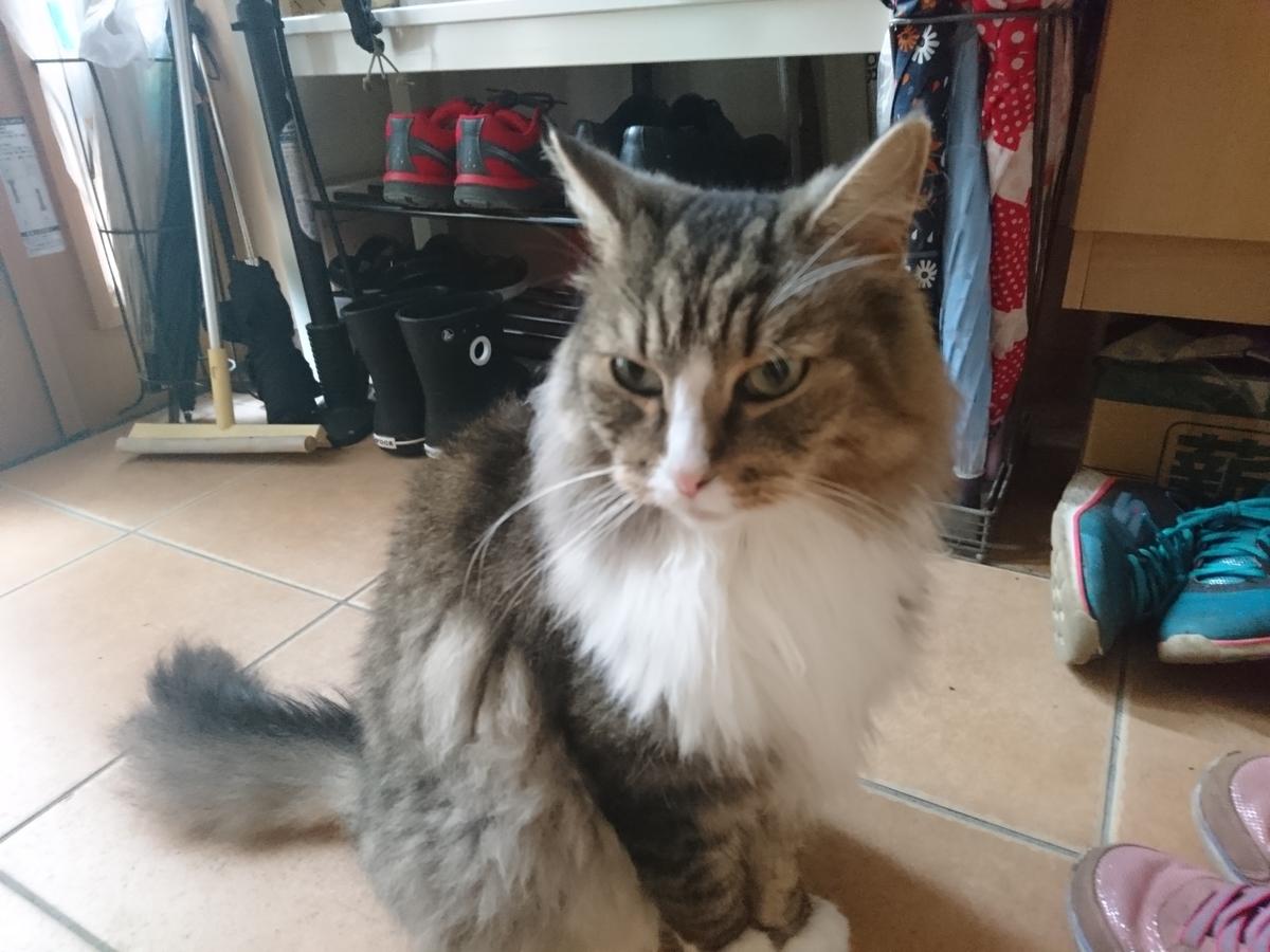 f:id:cat-cat-48:20200801165750j:plain