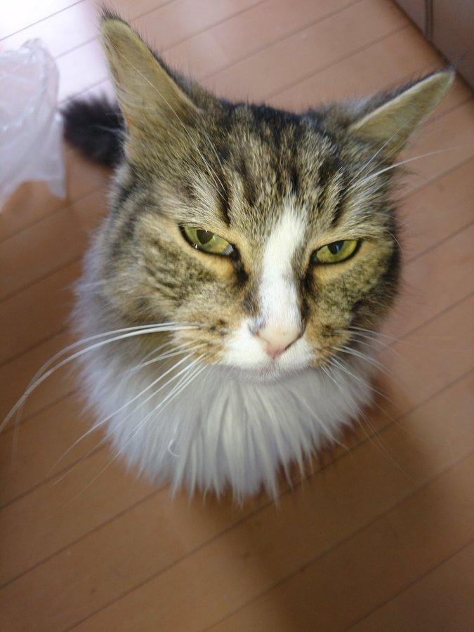 f:id:cat-cat-48:20200810100851j:plain