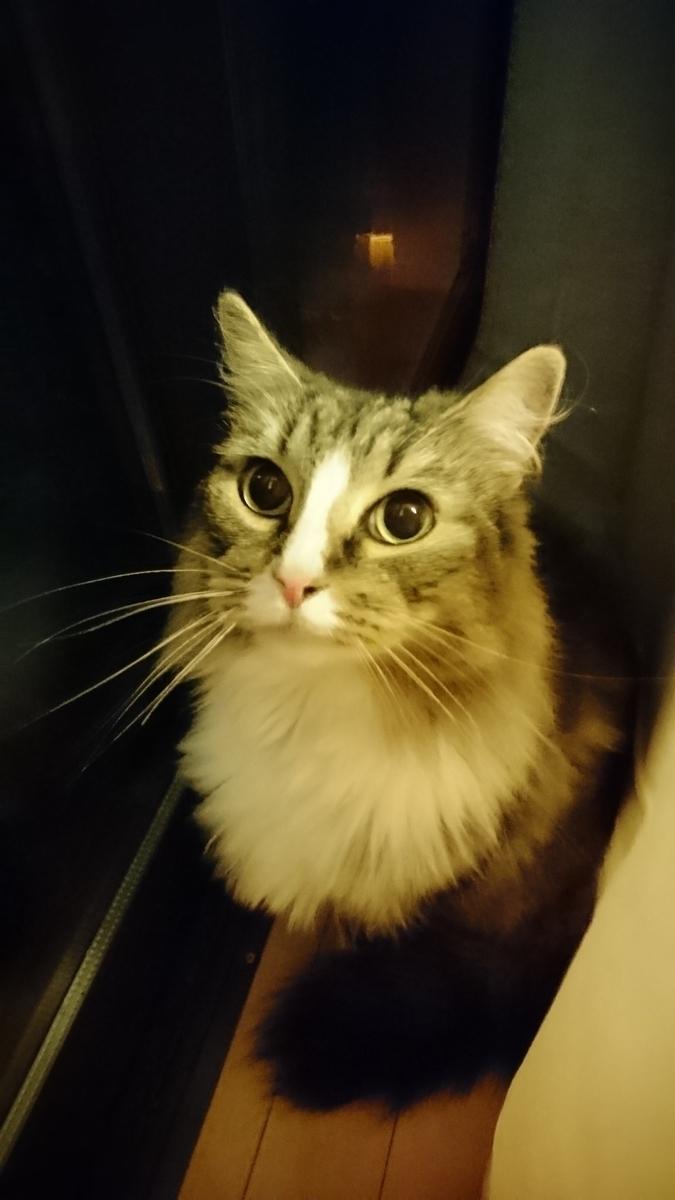 f:id:cat-cat-48:20200810100917j:plain