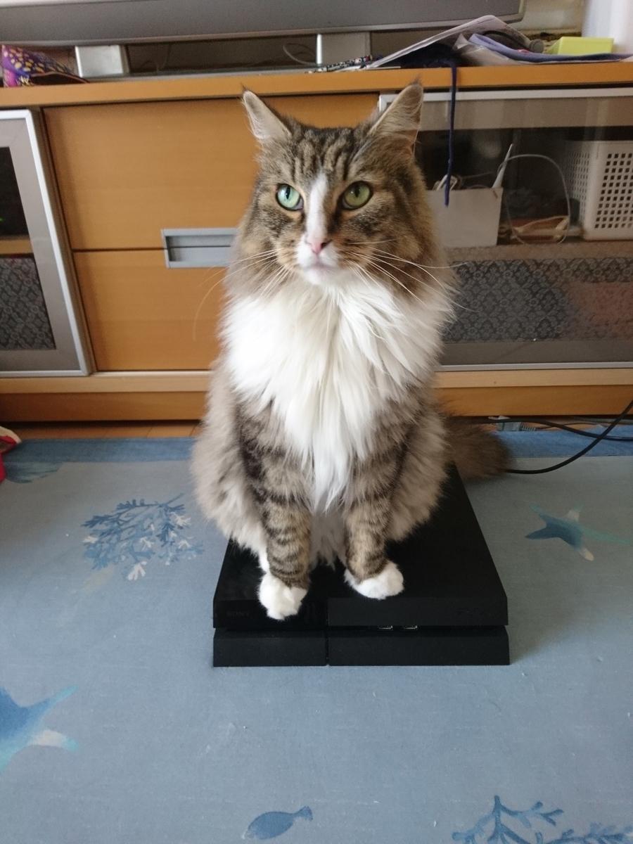 f:id:cat-cat-48:20200810100948j:plain