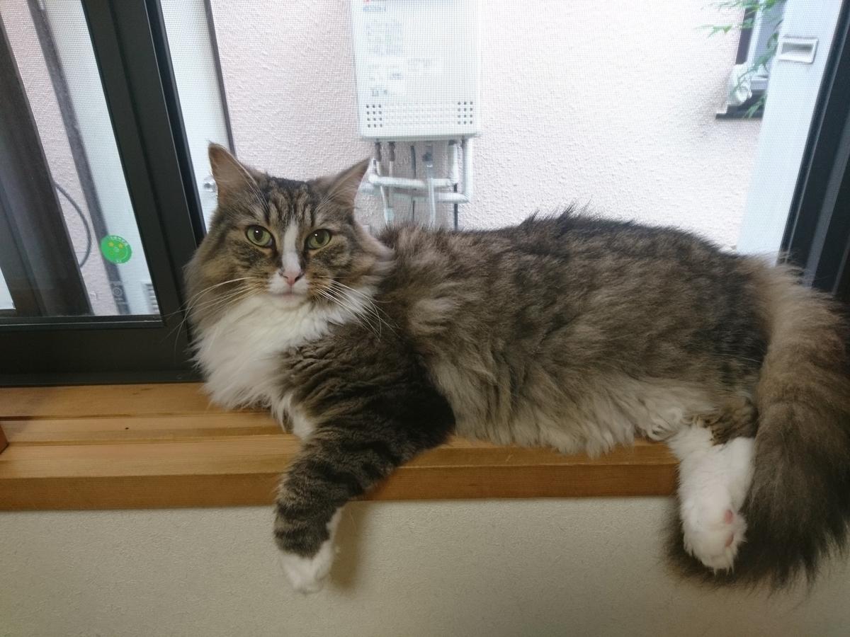 f:id:cat-cat-48:20200810101022j:plain