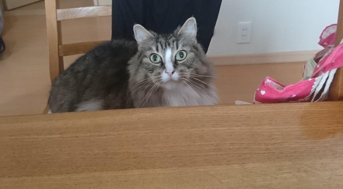 f:id:cat-cat-48:20200810101836j:plain