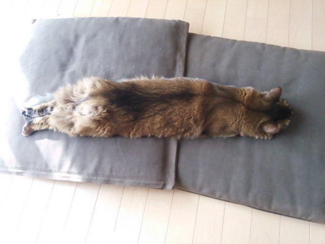 f:id:cat-cat-48:20200810103546j:plain