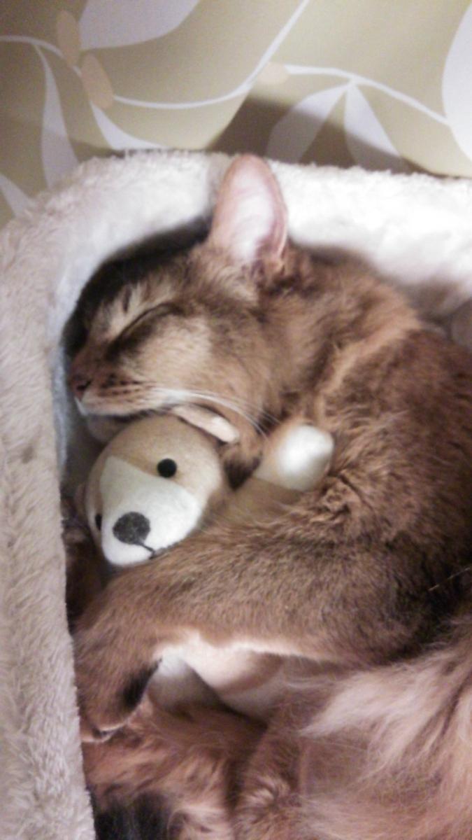 f:id:cat-cat-48:20200810103659j:plain