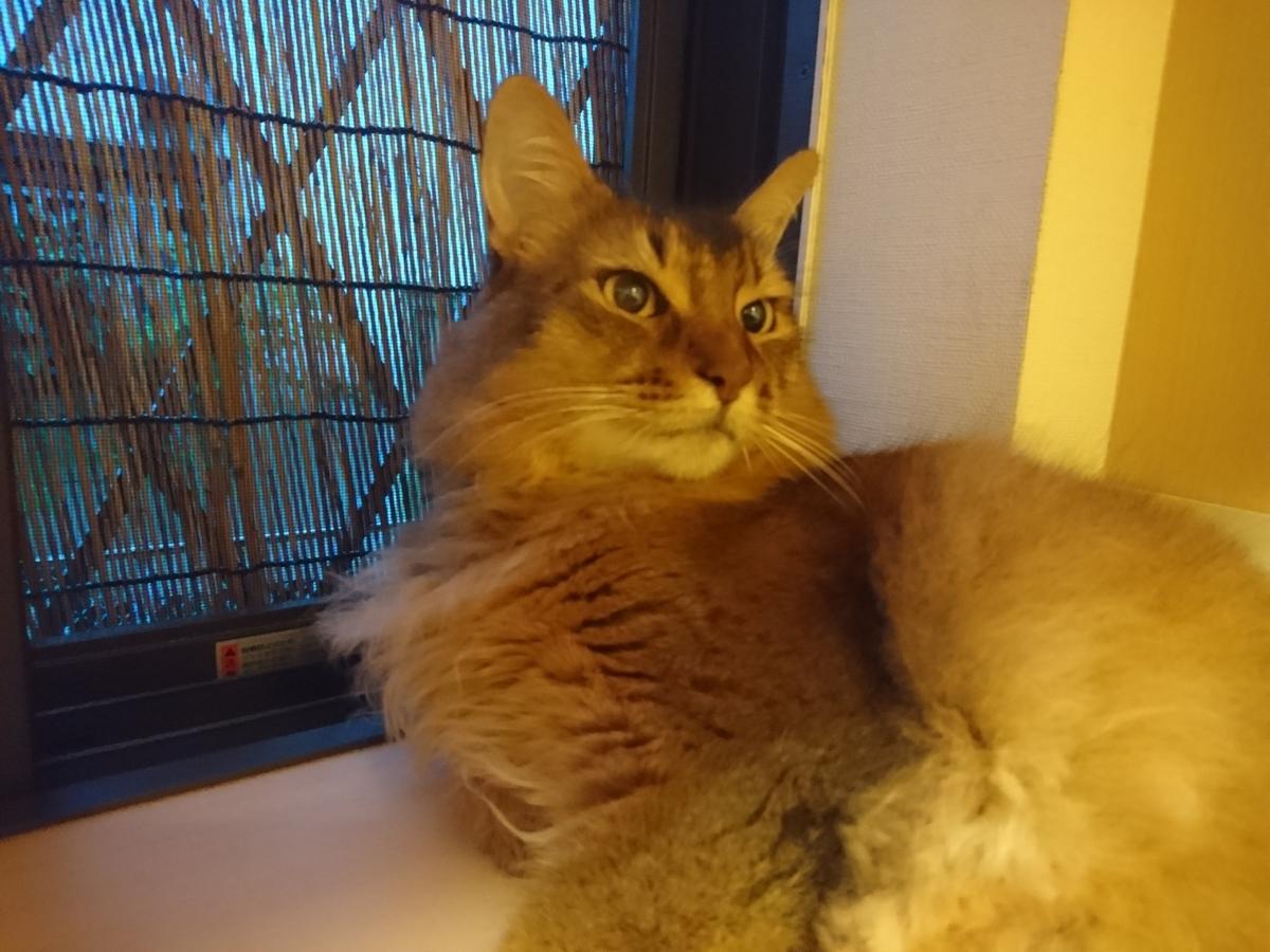 f:id:cat-cat-48:20200810103749j:plain